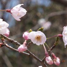 もう春~(♪) はる~(♪)
