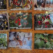 妙高高原の開花情報はここで