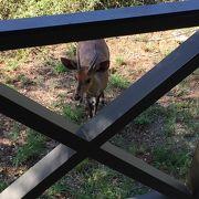 世界に名だたるサビサンド私営動物保護区はやはり凄かった!