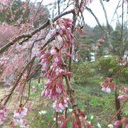 幽玄なる春宵一刻値千金の夜桜