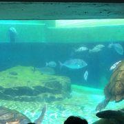 手軽な水族館