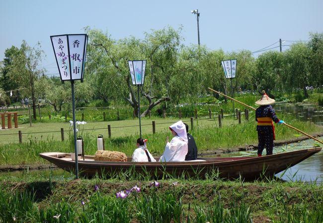 水生植物園で嫁入り舟