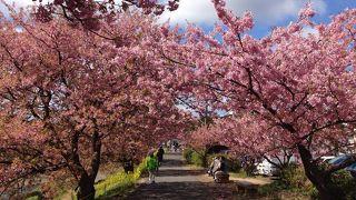 のどかな田園風景と桜