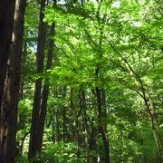 大和市最大の森