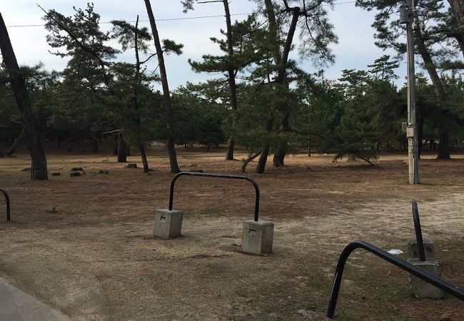 砂絵の周囲の松原