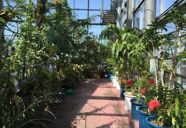 保内公園熱帯植物園温室