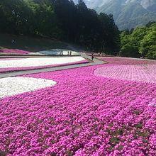 秩父の芝桜を見に行くのに途中下車