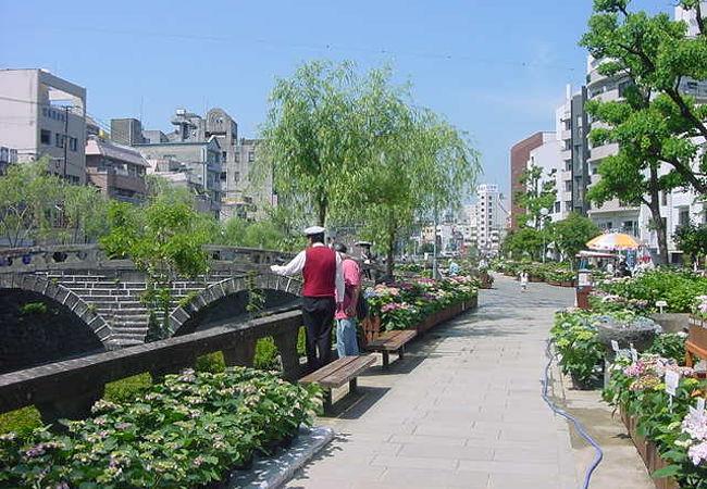 市内各地に紫陽花が