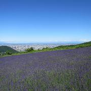 札幌のラベンダーの名所。視界が良いと石狩湾、旭岳?