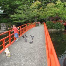 池の中の朱の太鼓橋