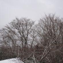 雪が降出す