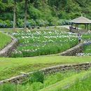 播州山崎花菖蒲園
