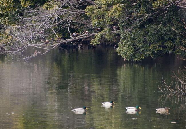大池緑地公園