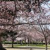 伊丹のさくらの名所です。ワシントンDCから里帰りしたポトマック桜も見れます。