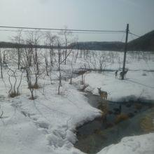 雪の釧路湿原に汽笛で逃げ出したエゾシカ