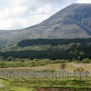 雄大な景色の葡萄畑