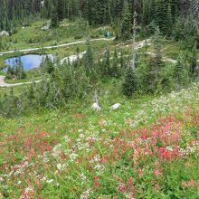 山頂のトレイルと高山植物