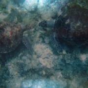 海亀ビーチ