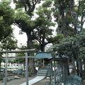 写真:弁天の森