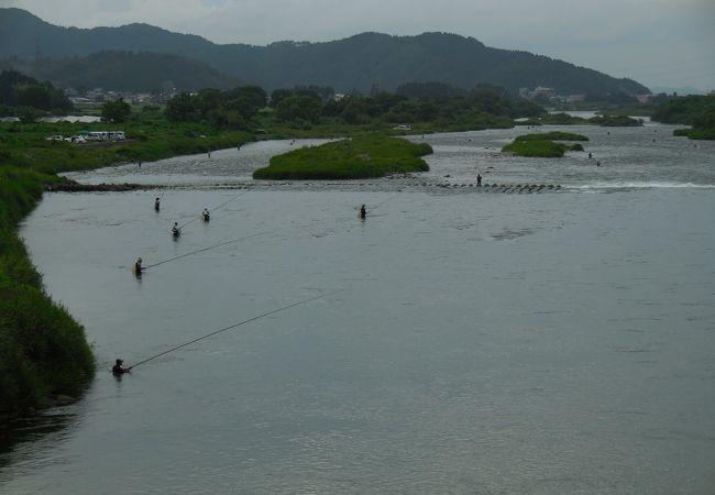 九頭竜川の鮎釣り (九頭竜川中部漁業協同組合)