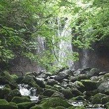 滝の下の川も素敵な渓流