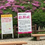 ミヤマキリシマの開花中に行われるイベント『仙酔峡つつじ祭り』