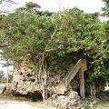 写真:津波大石 (つなみうふいし)