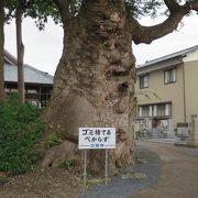 人面木があります。