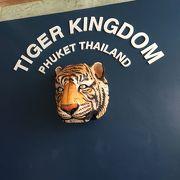 虎との写真が撮れる!!