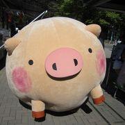 かわいい豚さん出現
