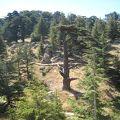カディーシャ渓谷(聖なる谷)と神のスギの森(ホルシュ・アルツ・エル=ラーブ)