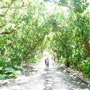 防潮林のトンネル