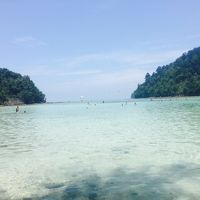 サンゴ礁 ボートシュノーケリングツアー