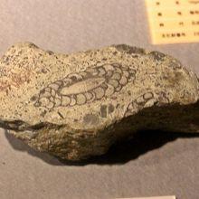 海綿の化石
