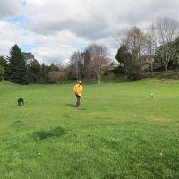 裏は広〜い公園。犬を走らせてもいいし、人が散歩してもいい。