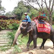 象乗り体験、楽しめます。