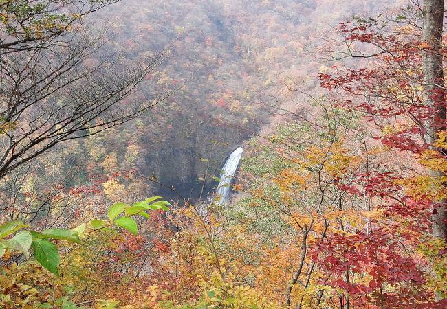 滝見台からでなく不動滝の展望台から見た方がいいです。