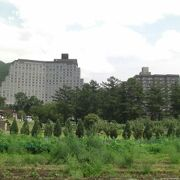 畑と雑草とハーブ園