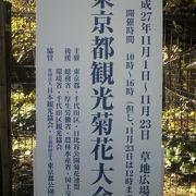 東京都観光菊花大会が、日比谷公園の草地広場で開催されていました。