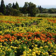 お花の開花状況によって印象が変わります