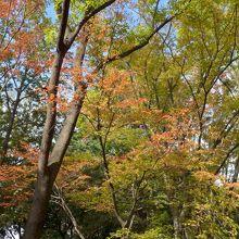 武蔵野の森