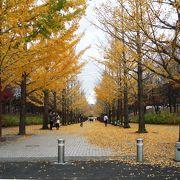 黄葉の散歩道♫