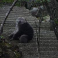 ホテルから5分先に猿がいました。