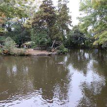 神池・白鳥の池などがあります。