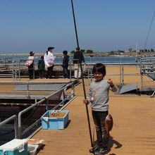 鯛釣りや餌やりができます。