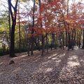 写真:多摩平緑地 (多摩平の森)