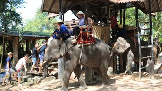 パタヤで象乗りと象のショーを見るならここ