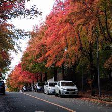 赤、黄、緑の三色の葉が美しい