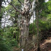 巨大な杉のある玉置神社