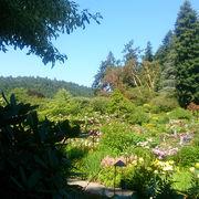 とても綺麗で……広いお庭です。